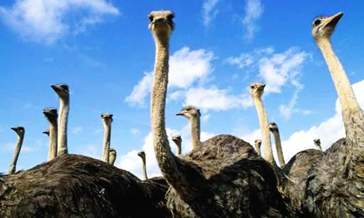 Как добраться до страусиной фермы в Перми