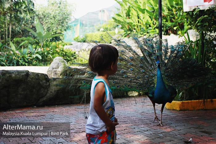 Едем в Куала Лумпур отдых с детьми и Куала Лумпур детям