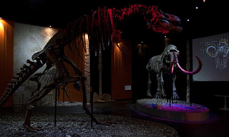 Пермский период в музее - мамонты, бизоны, динозавры
