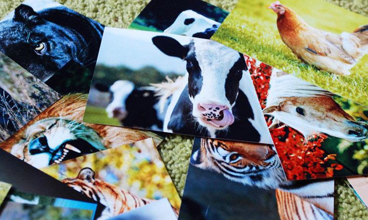 Развивающие карточки для детей с животными, фруктами и овощами скачать.