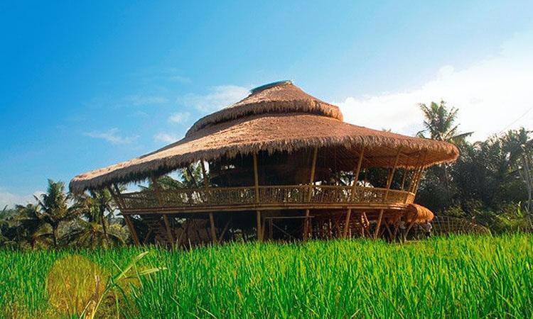 Зеленая школа на Бали. Альтернативное образование за границей.