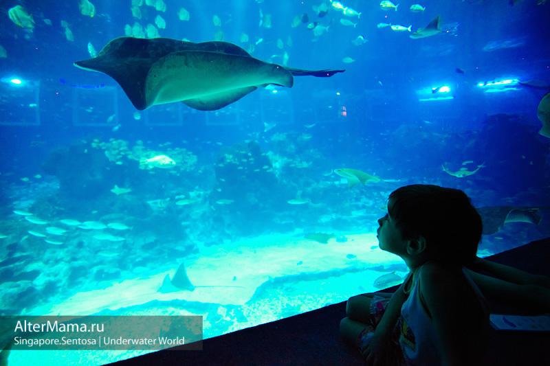 Развлечения Сентоза - океанариум sea Aquarium цена билета