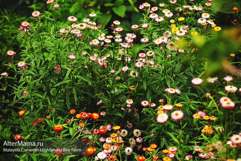 Экскурсии в Cameron Highlands пчелиные пасеки