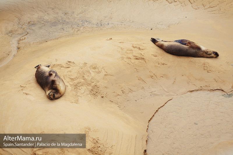 Морские львы в зоопарке Ла Магдалена в Кантабрии