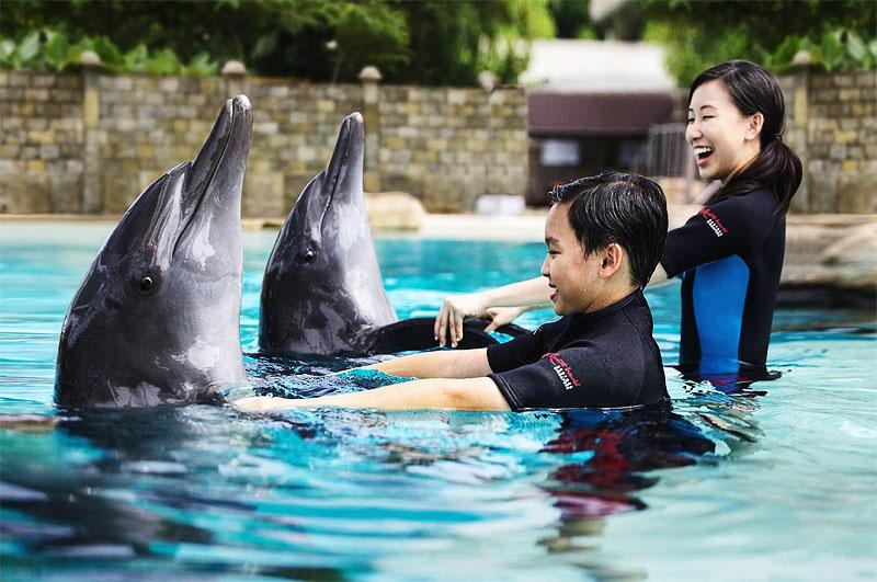 Развлечения на Сентозе - шоу дельфинов
