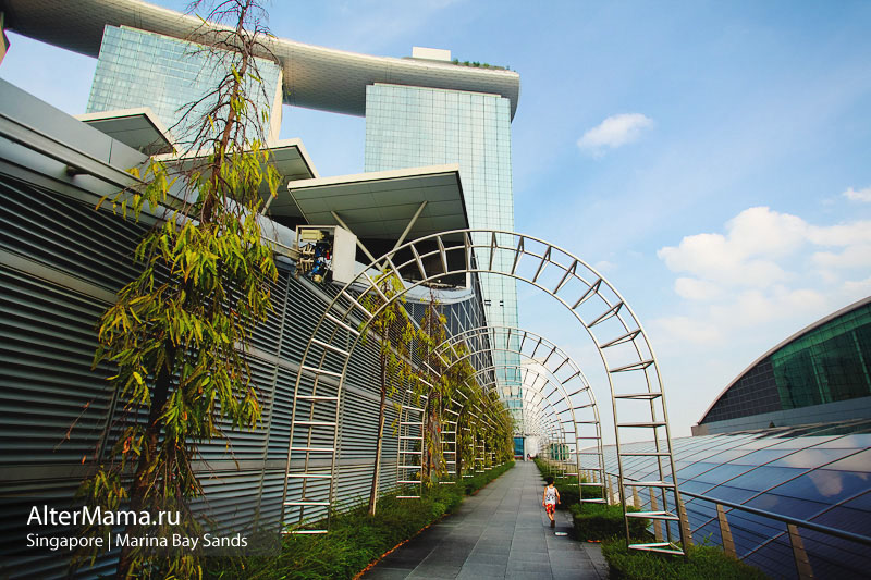 Отель Марина Бэй Сэндс в Сингапуре фото