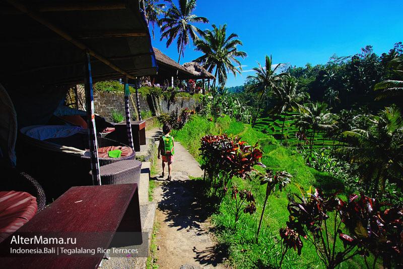 Как посетить рисовые террасы Бали самостоятельно