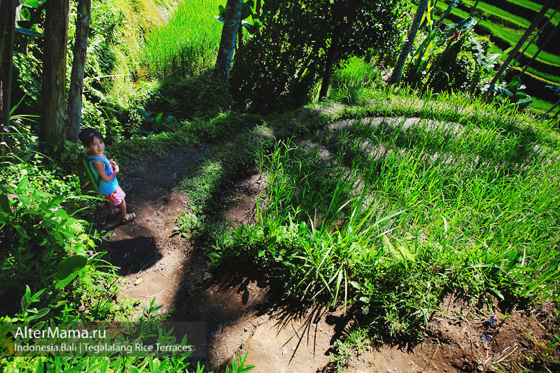 Рисовые террасы на Бали Tegallalang
