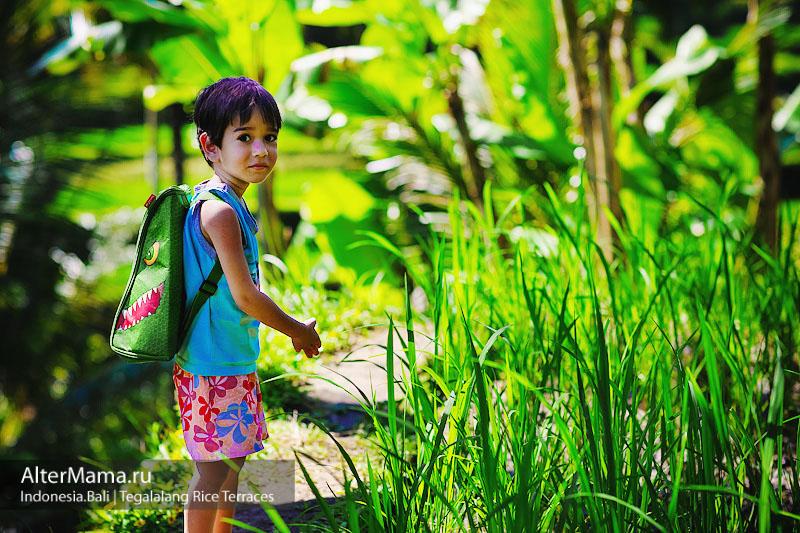 Рисовые террасы Тегаллаланг отзыв с фото