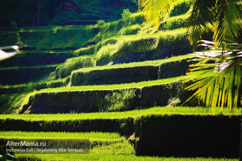 Рисовые террасы Тегаллаланг на карте