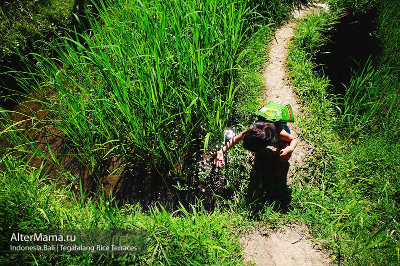 Эко-экскурсии на Бали - рисовые террасы