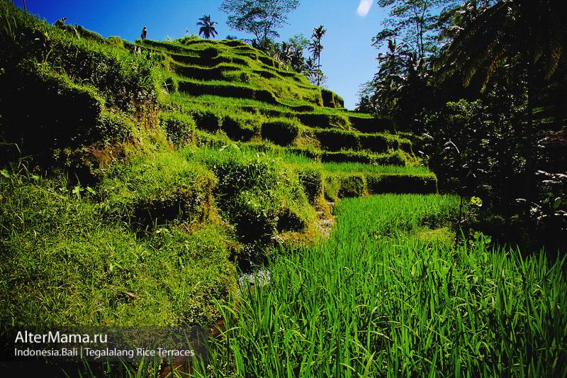 Где находится деревня Тегаллаланг