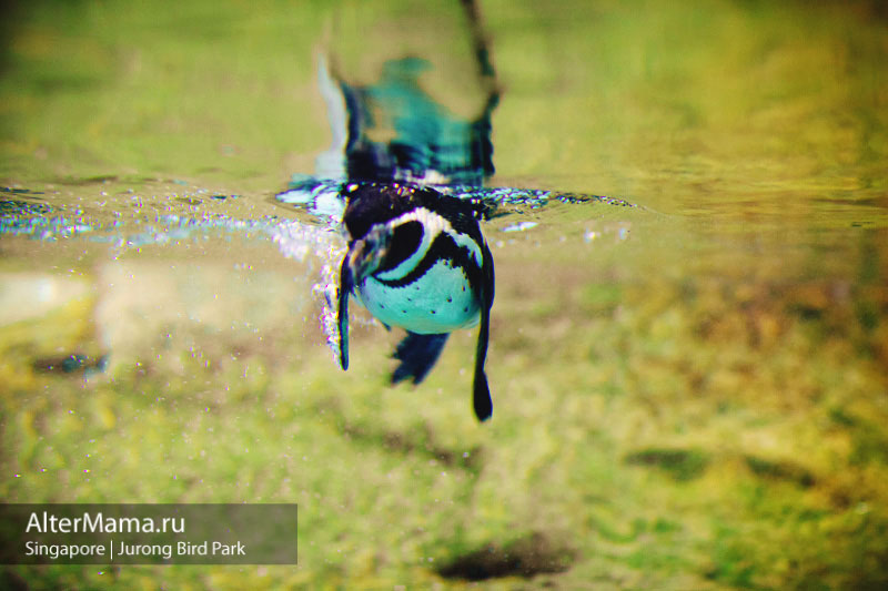Парк птиц Сингапур отзывы