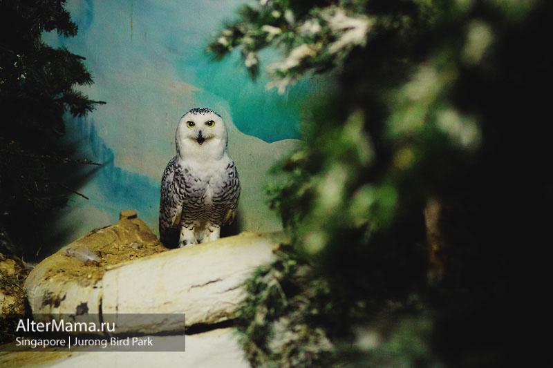 Сингапур парк птиц фото
