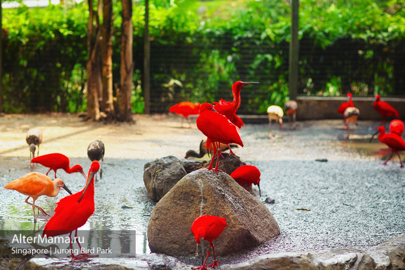 Парк птиц Сингапур адрес