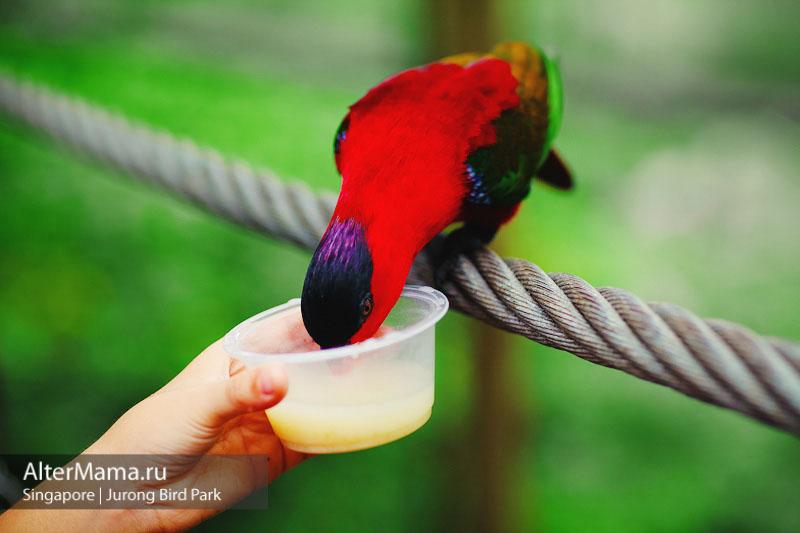 Парк птиц в Сингапуре отзывы