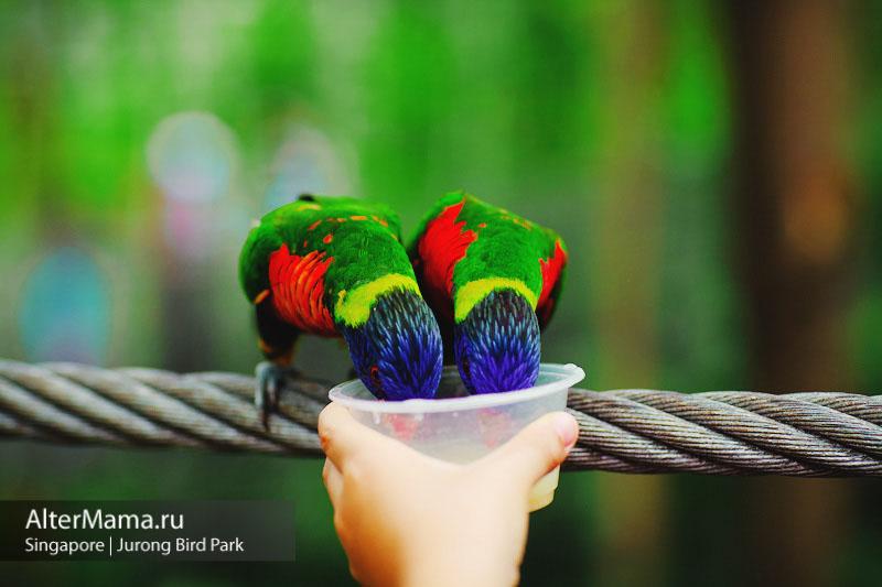 Парк птиц Сингапур как доехать