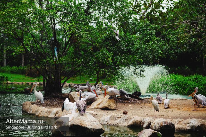 Парк птиц Джуронг Сингапур