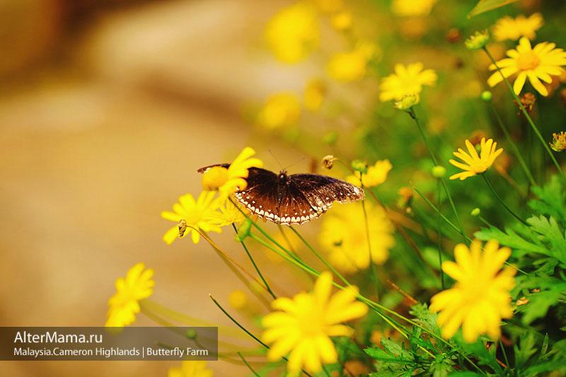 Парк бабочек в Малайзии