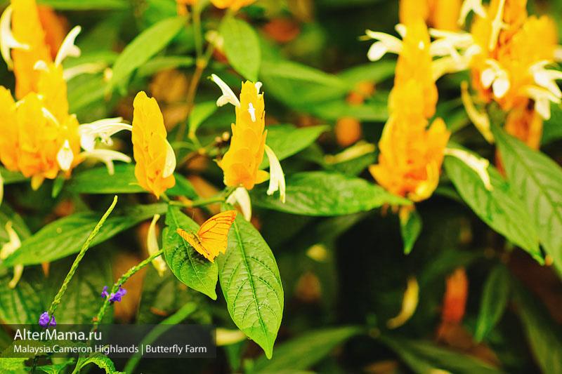 Парк бабочек Малайзия