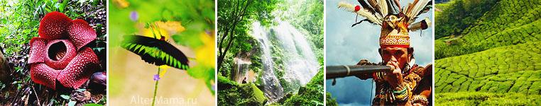 Камерон Хайлендс Малайзия обзор экскурсий