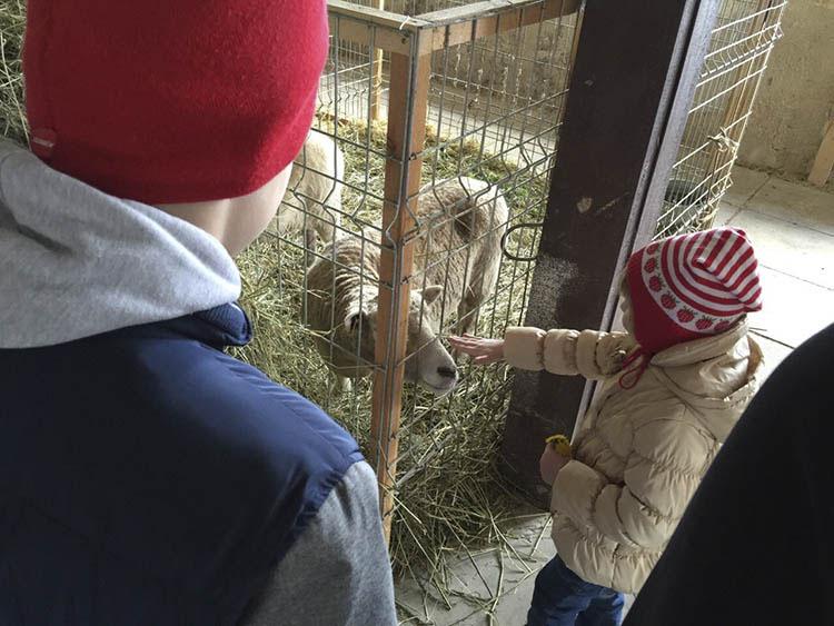 Посетить в Эстонии Покумаа, Лииклуслинн, Алатскиви с детьми