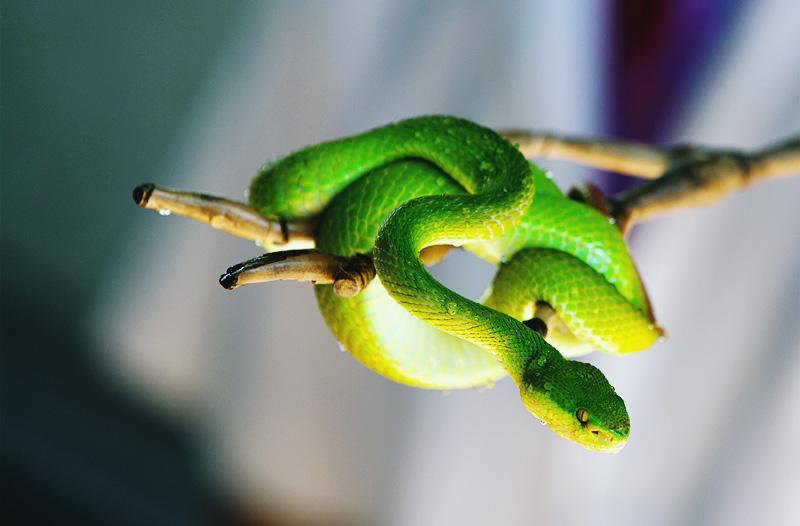 Таиланд чего опасаться змеи