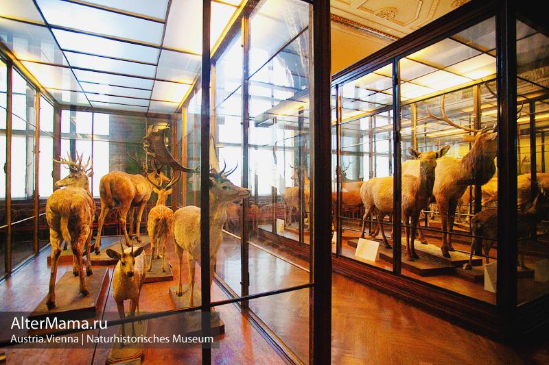 В Музей естествознания в Вене с ребенком
