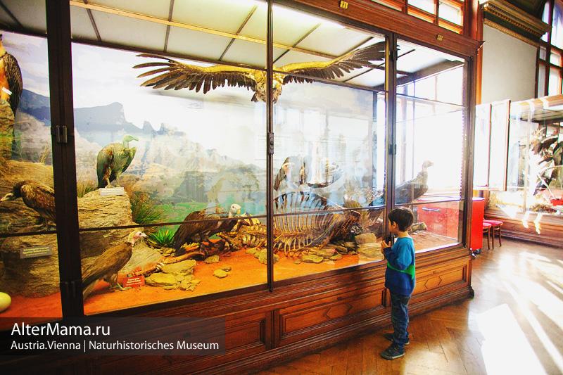 Музей естествознания Вена часы работы