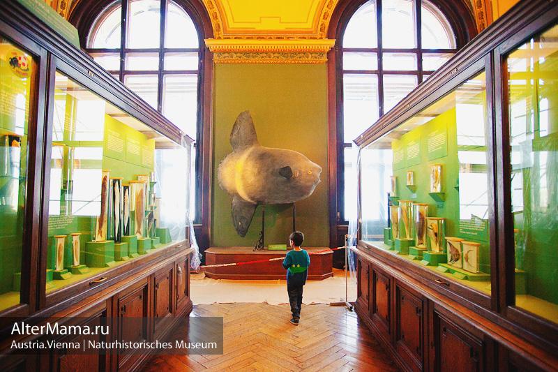 Фото и отзывы про Музей естествознания Вена Австрия