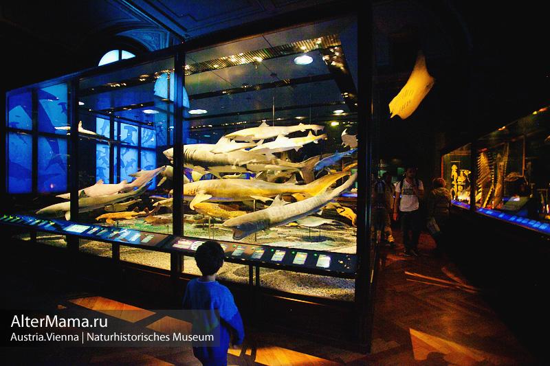 Музей естественной истории Вена