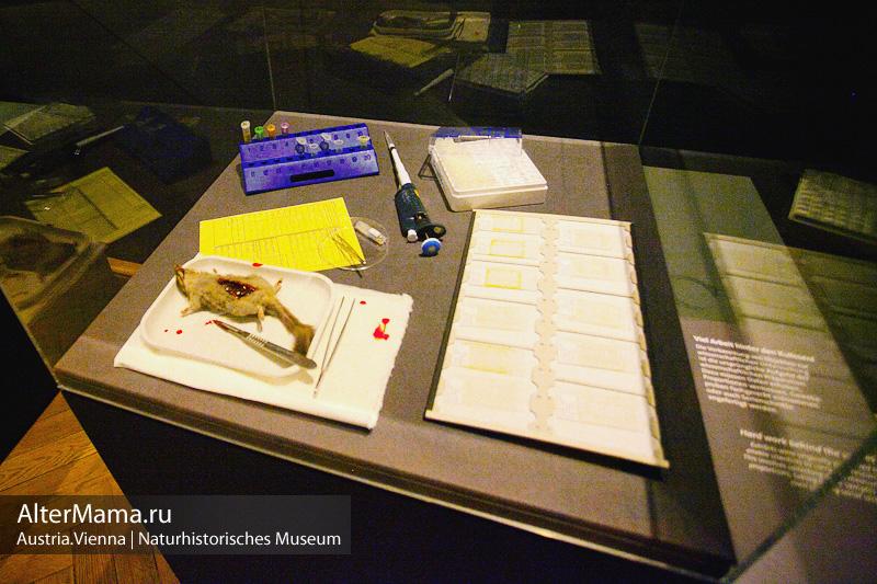 Музей естествознания Вена цена билета
