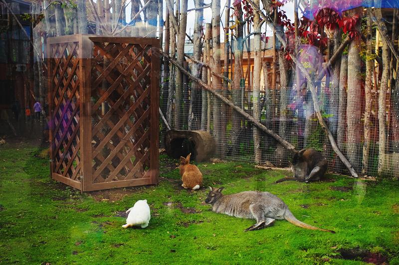 Зоопарк в Ижевске адрес, цены и часы работы