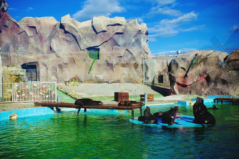 Шоу ижевский зоопарк животные