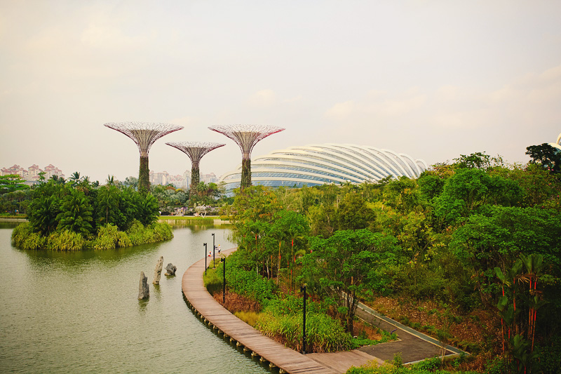 Сады у залива Gardens by the Bay Сингапур