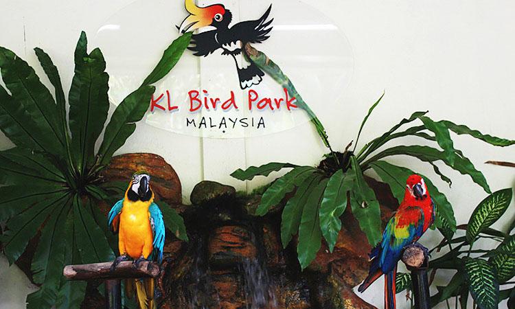 KL Bird Park — Парк птиц Куала Лумпур. Что посетить с ребенком в Куала-Лумпуре