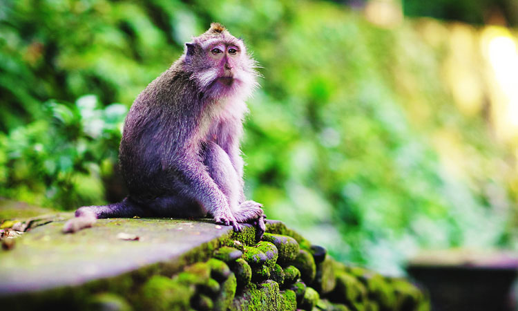 Лес обезьян Бали - красивые фотографии Monkey Forest в Убуде.