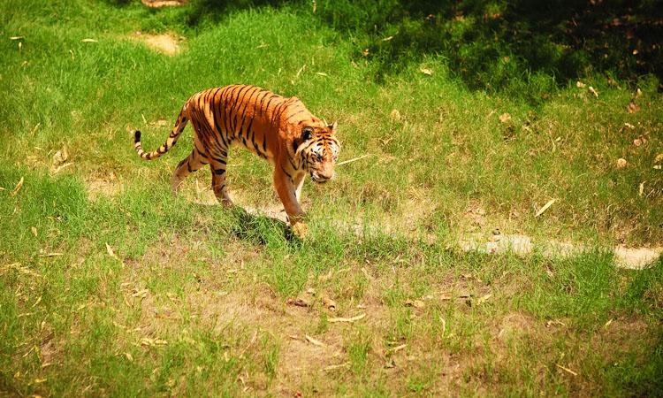 Джайпур достопримечательности - зоопарк. Что посмотреть в Джайпуре с детьми.
