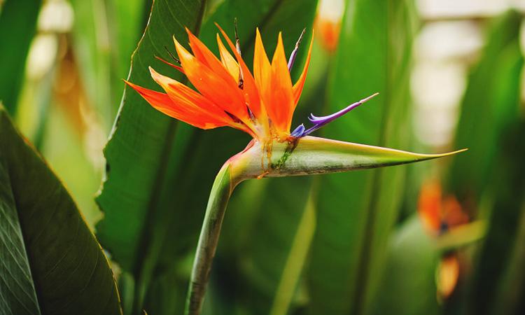 Необычные цветы в ливневых лесах Малайзии