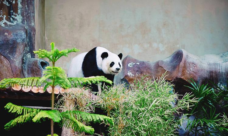 Чиангмайский зоопарк. Зоопарк Чианг Май отзыв с фото.