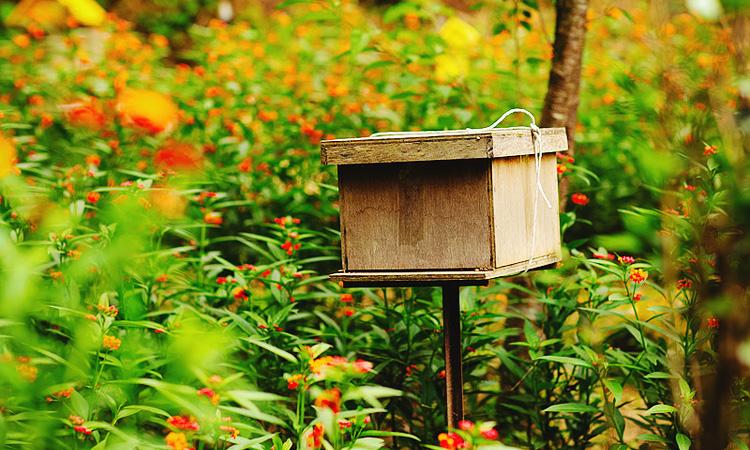Пчелоферма в Камерон Хайленд, эко экскурсии в Малайзии.