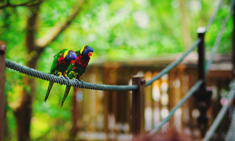 Парк птиц Джуронг. Парк птиц Сингапур отзывы.