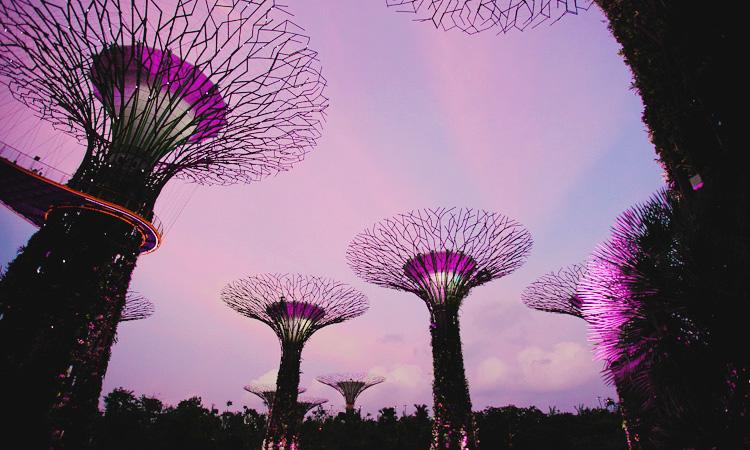 Отзыв про сады у залива в Сингапуре с фото и ценами на вход.