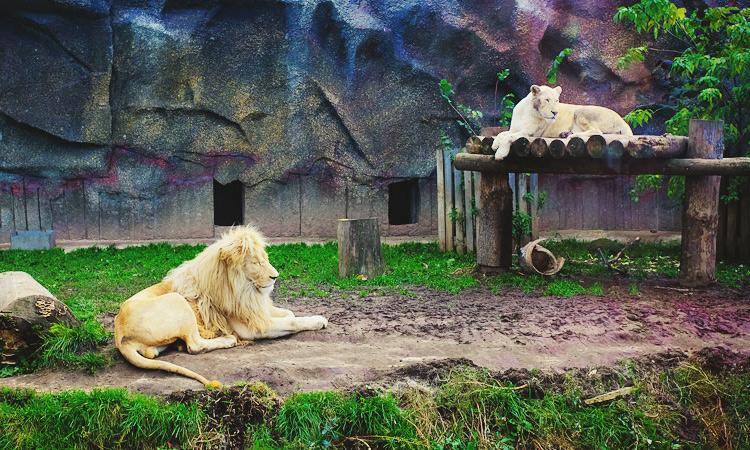 Ижевский зоопарк отзывы. Зоопарк в Ижевске фото.