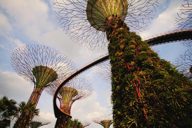 Сингапурские деревья фото