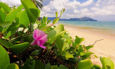 Все, что вы хотели знать о пляже Банг Сарей в Паттайе