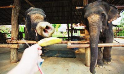 Где покататься на слонах в Паттайе и покупаться с ними